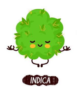 indica-weed-bud-compressor
