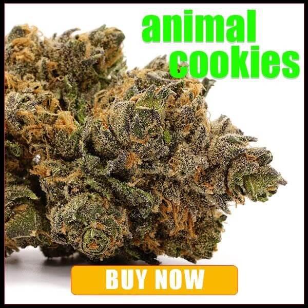 Animal Cookies weed Strain