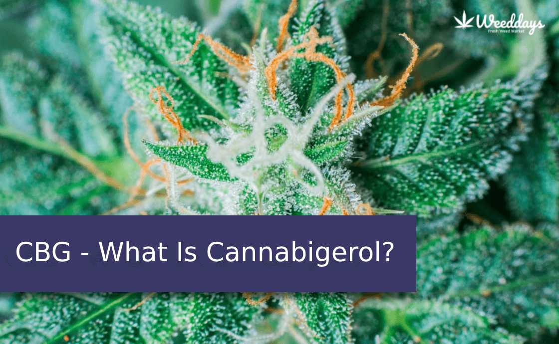 CBG - What Is Cannabigerol?