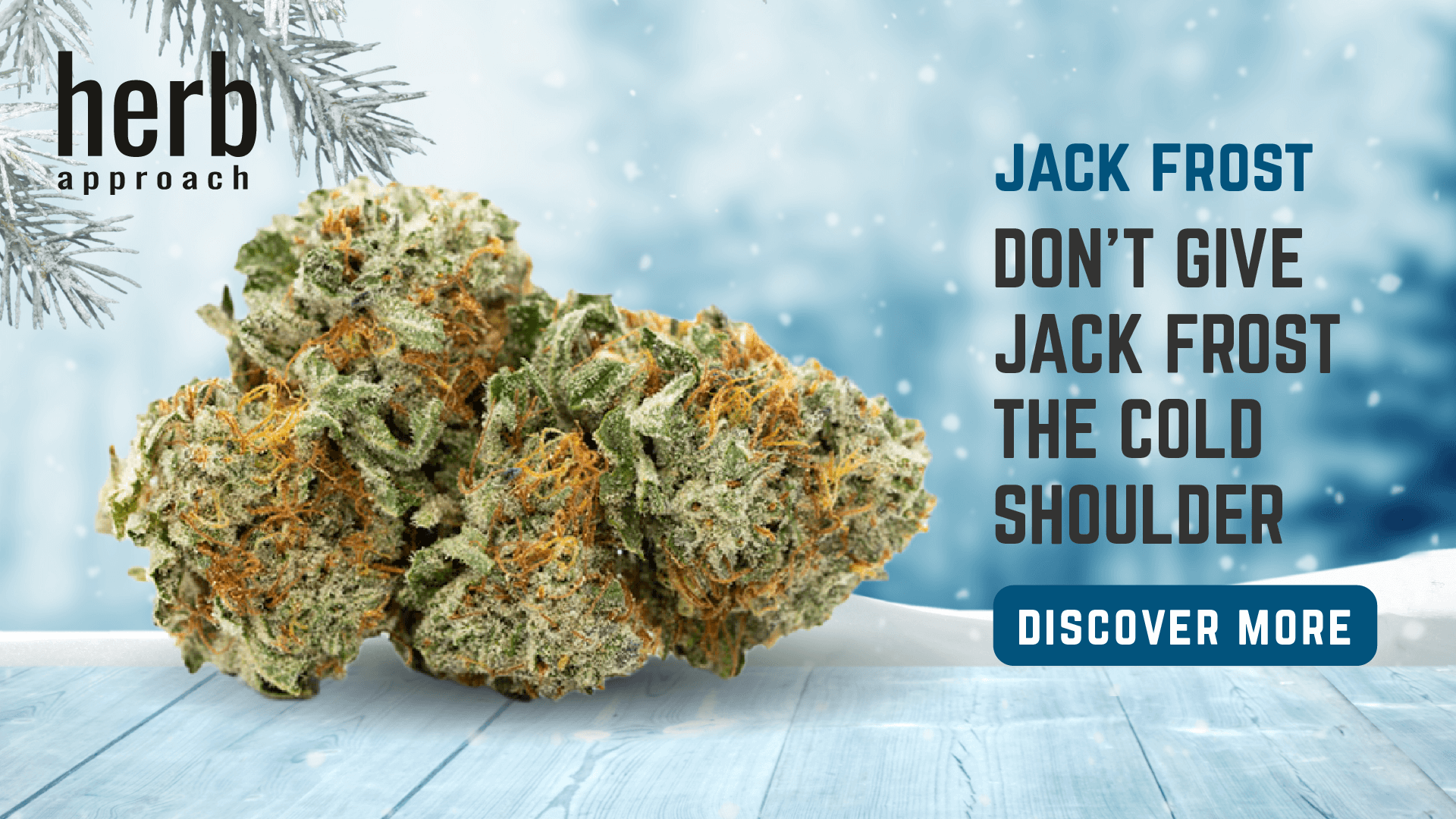 jack forest Weed Strain